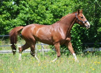 horse mare trotting in field detox liver