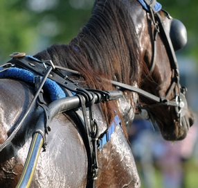Horse sweat harness racing